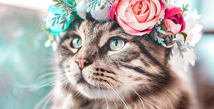 75106ca882 On est tombés amoureux du travail de Yarely, créatrice de la Freya's Floral  Company, qui fabrique des couronnes de fleurs pour les chats.